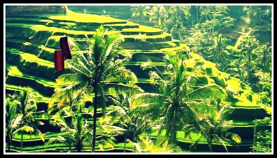 Bali Tegalalang terrazze verdi