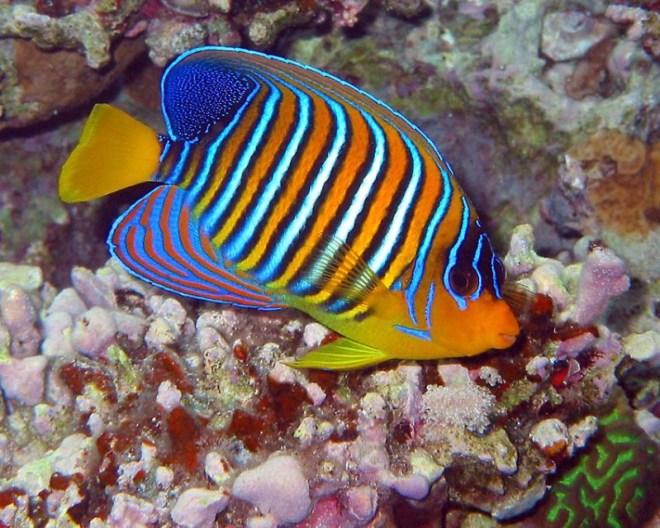 viaggiare eco-friendly ecologia e rispetto per oceano