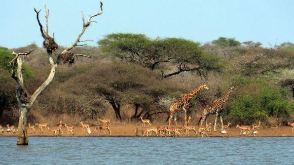 Sudafrica Abbeverata al Parco Kruger
