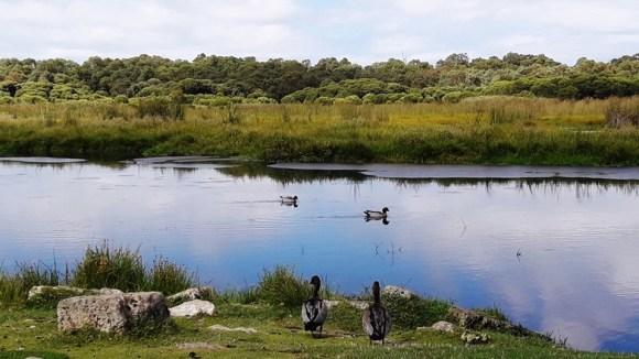 western australia yanchep view