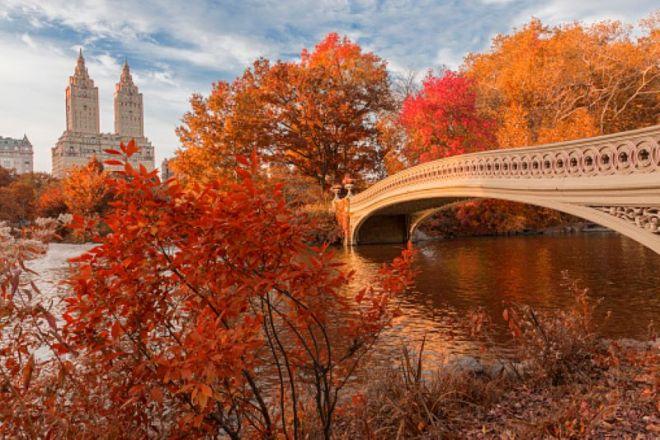 Foliage Central Park