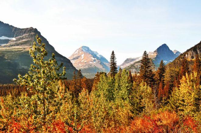 Foliage-Montana