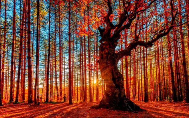 Foliage-South-Dakota