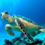 diving gili trawangan