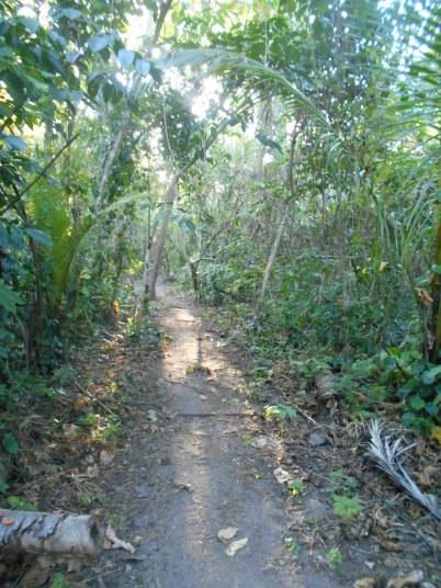 Walk Through the Woods - Plun Island