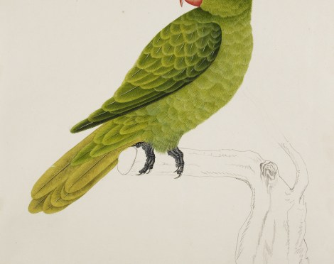 The Malay Tale of the Wise Parrot – The British Library