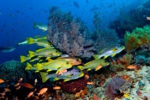 Bunaken Sulawesi scuba diving