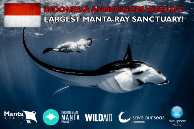 Indonesia scuba diving