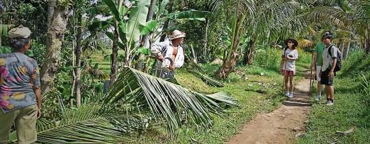 Trekking in Ubud - Bali, Indonesië