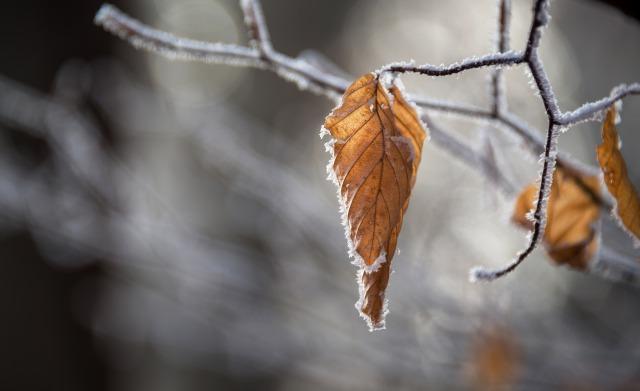 small_Canva - Frozen Autumn Leaf