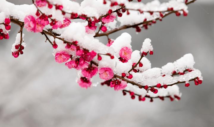 ふ_冬ブルべ