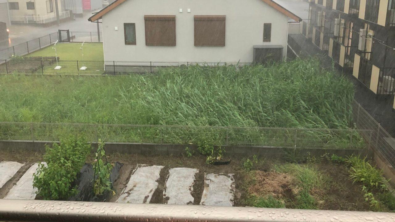 げ_ゲリラ豪雨_20210823_001