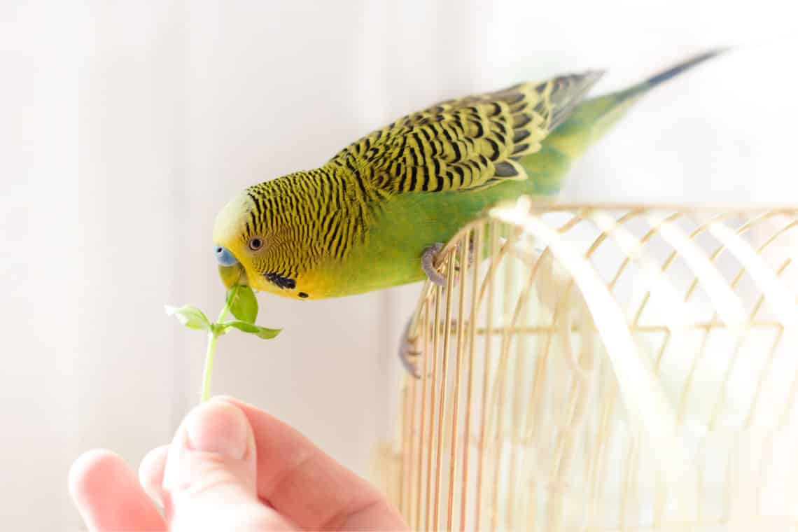 Houseplants Safe For Birds - The Ultimate List | Indoor Garden Nook