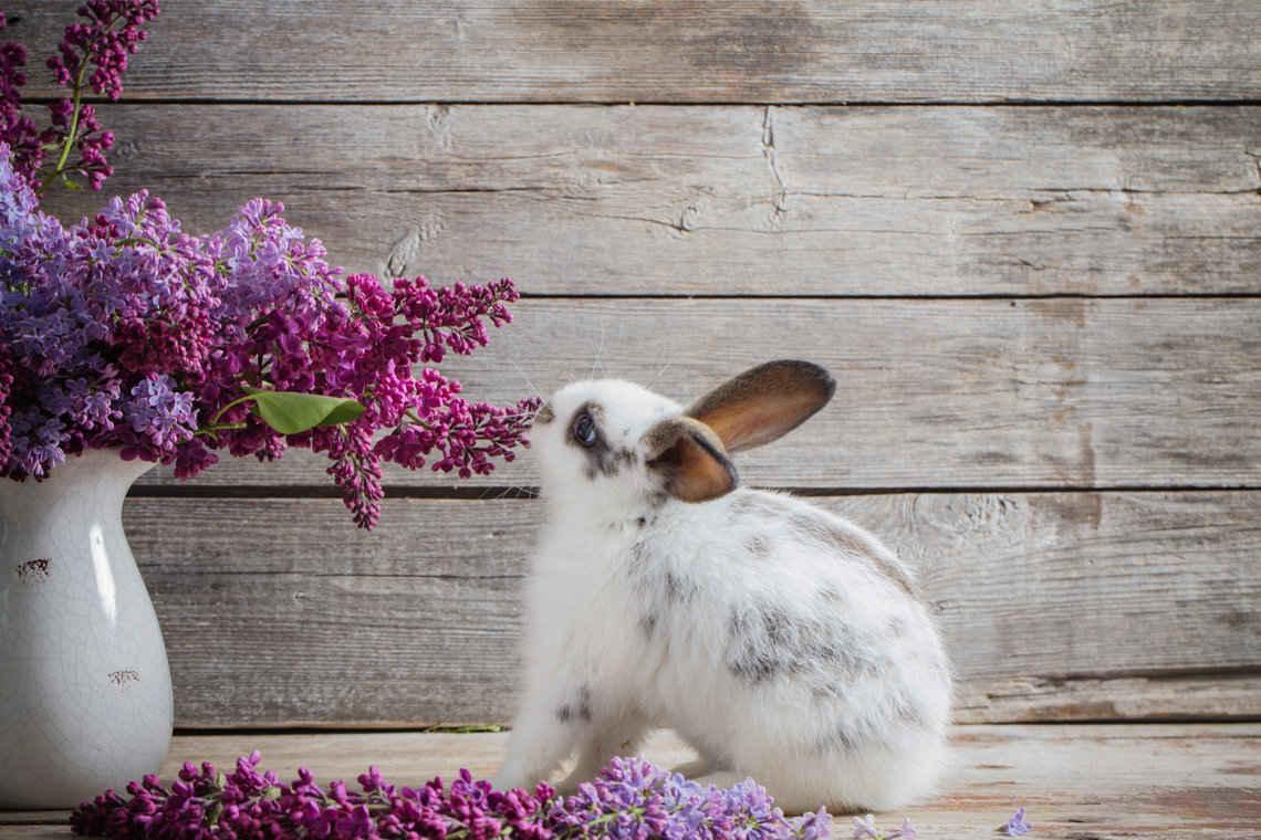 houseplants safe for rabbits- the ultimate list | indoor garden nook