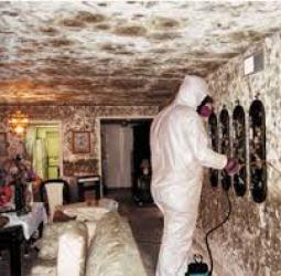 indoor-mold