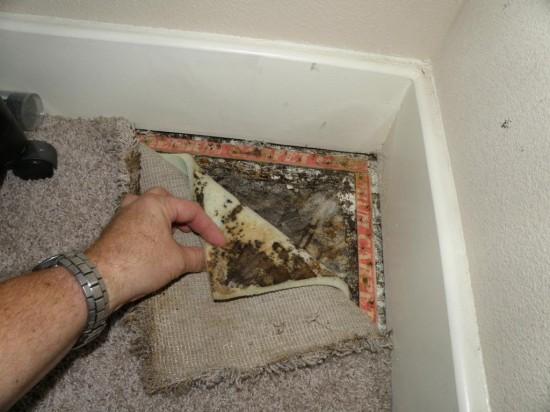 Is Indoor Mold Dangerous Indoor Restore Environmental