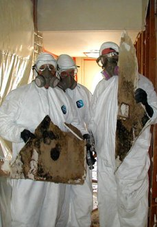 fullerton-material-mold-removal-remediation