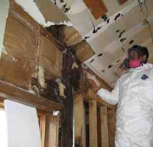 glendale-mold-growth-removal-remediation