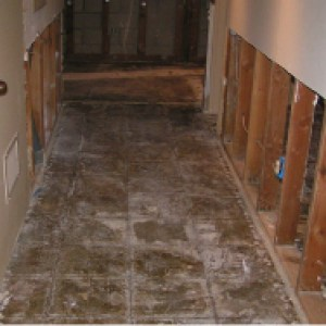 los-angeles-mold-damage-remediation
