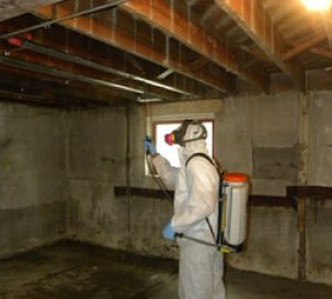 mold-spray-santa-clarita