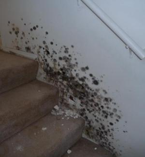 el-segundo-mold-staircase-inspection-testing