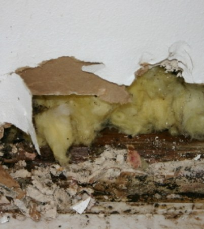 water-damage-mold-removal