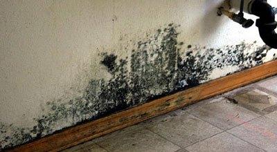 mold-growth-under-sink