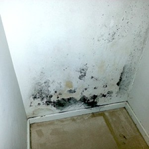mold inspection in pinole closet