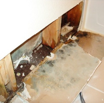 mold removal material extraction