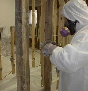 mold removal of contaminated materials of a sacramento home