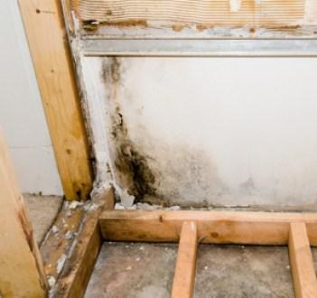 Mold-growth-in-oxnard-home