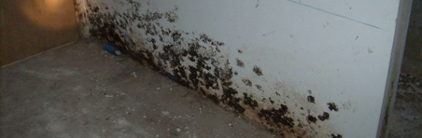chico-water-damage-mold-inspection