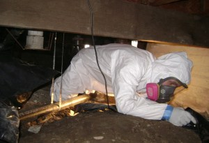crawlspace-mold-removal-mold-remediation