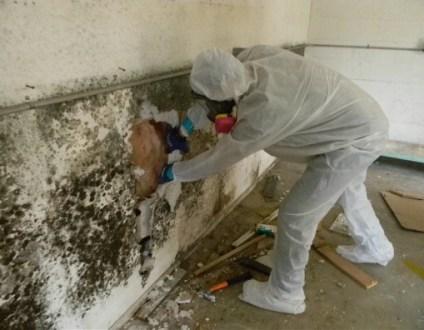 mold-removal-concord-ca