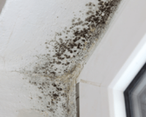 sign-of-mold-in-antioch-property
