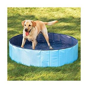 puppy pool, pets, dogs, camping, dog pool, glamping, backpacking, road trip, pet pool
