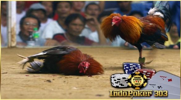 adu ayam, ayam pisau, agen s128.net, agen sabung ayam, agen sabung ayam teraman, sabung ayam pisau, sabung ayam filipina, agen s128 online, s128.net, sabung ayam terpecaya,adu ayam pisau, tangkas uang asli, bandar sabung ayam