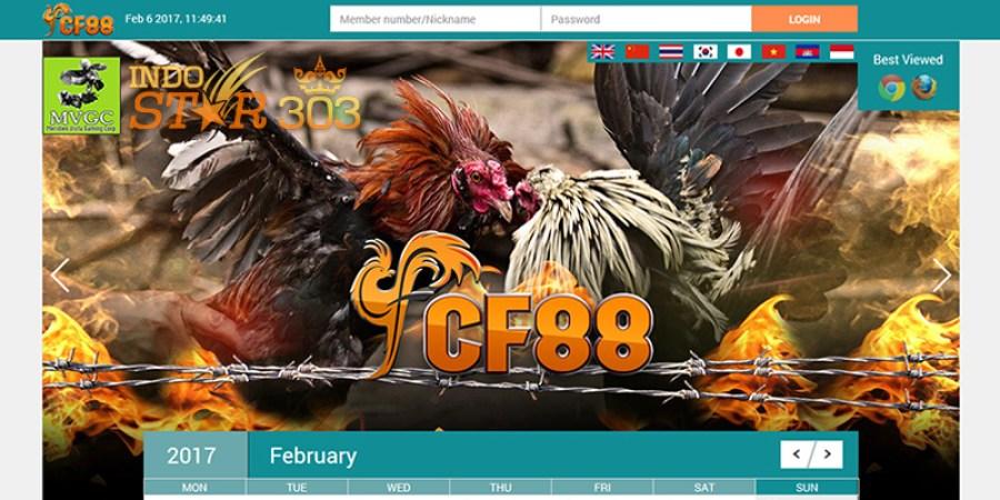 Tutorial Cara Bermain di Agen Sabung Ayam Online CF88