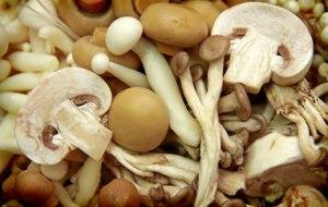 Manfaat Kesehatan Dari Jamur