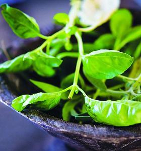 Herbal untuk Melancarkan Pencernaan
