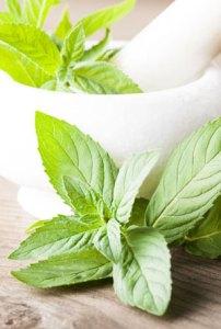 Manfaat Kesehatan dari Peppermint