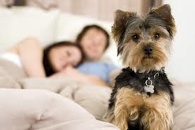 Tidur Bersama Hewan Peliharaan