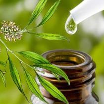 Manfaat Kecantikan dari Tea Tree Oil