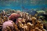 underwater life @ kakaban beach-2