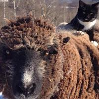 These Stories of Cats Befriending Farmed Animals Will Melt Your Heart