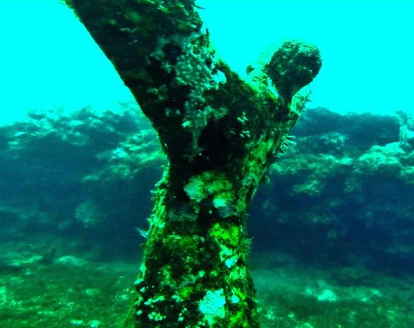 podwodny park 17ps