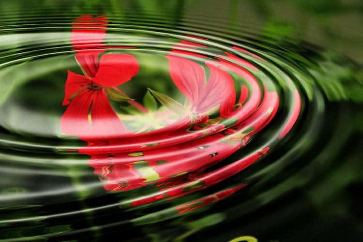 healingsirkler, bilde av ringer i vann og geranium