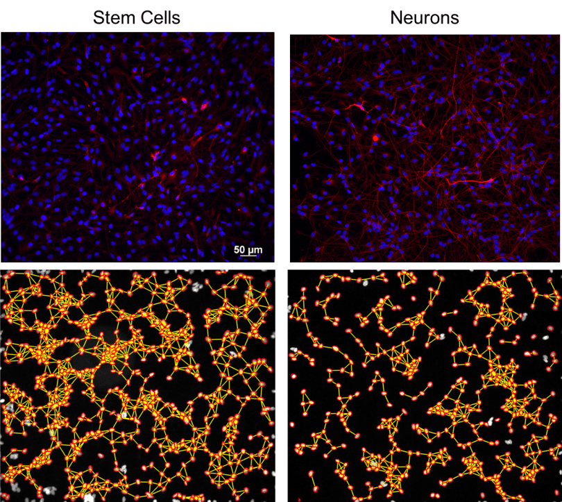 StemCells_Neurons_graphs