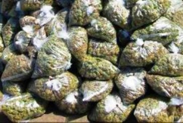 Three Ganja Smugglers Arrested—Two Suppliers Absconding