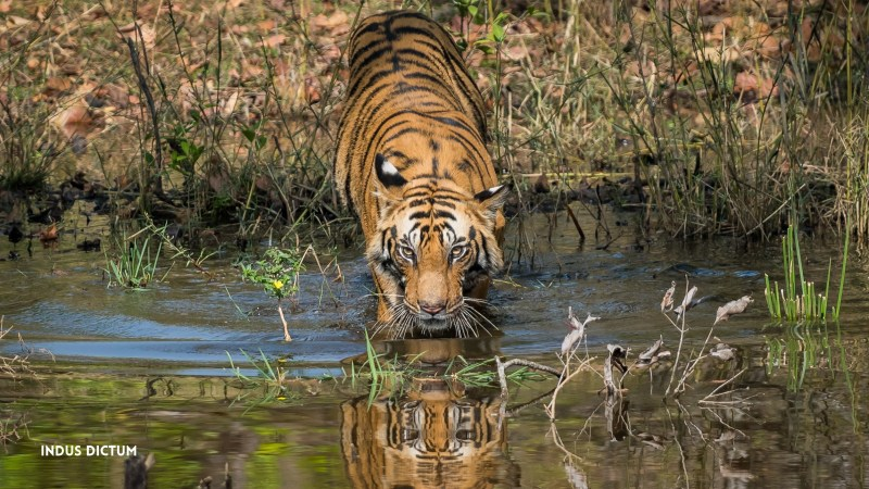 eye of the tiger watermark 1